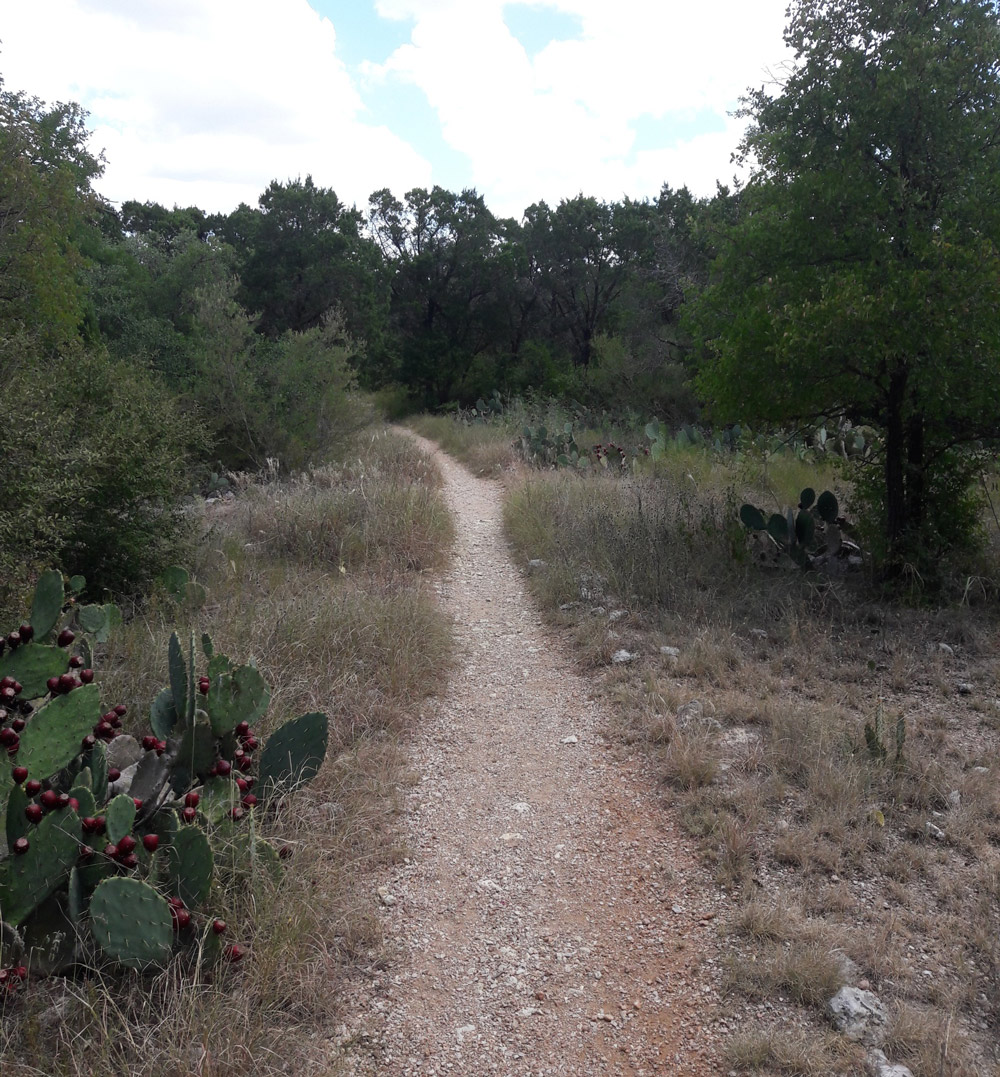 Trail lined with trees and cactus